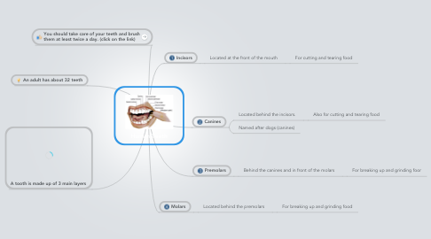 Mind Map: Human Teeth