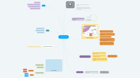 Mind Map: Nucleic Acid