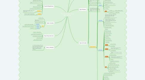 Mind Map: Clasificación Taxonómica Reino Animalia