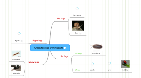 Mind Map: Characteristics of Minibeasts