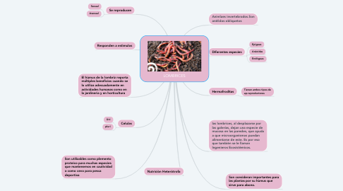 Mind Map: LOMBRICES