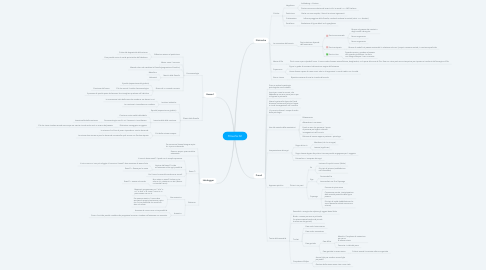Mind Map: Filosofia 02