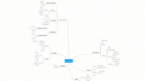 Mind Map: Ordinateur