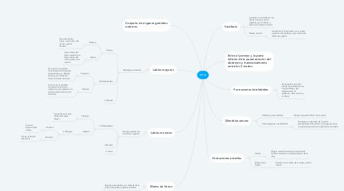 Mind Map: Vulva