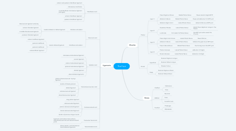 Mind Map: The Foot