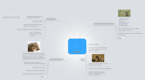 Mind Map: Cheetah