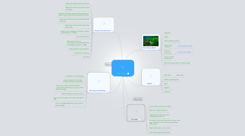 Mind Map: Sea Turtles