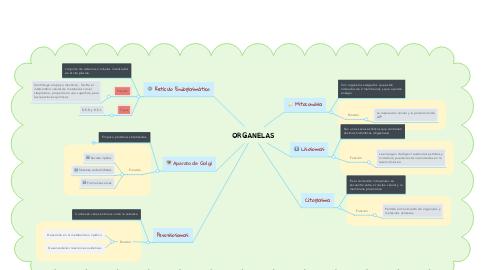 Mind Map: ORGANELAS