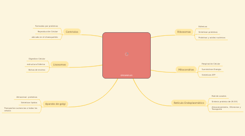 Mind Map: ORGANELAS