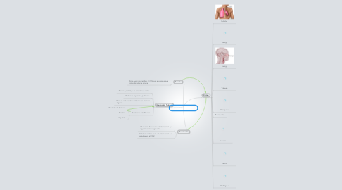 Mind Map: Sistema Respiratorio