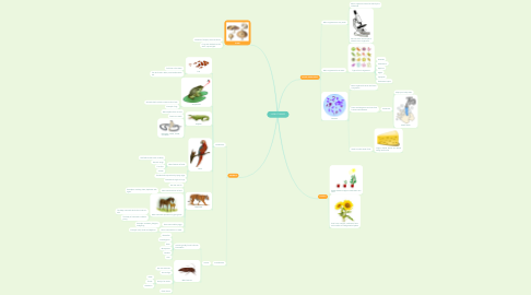 Mind Map: LIVING THINGS