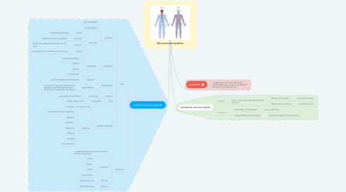 Mind Map: the nervous system