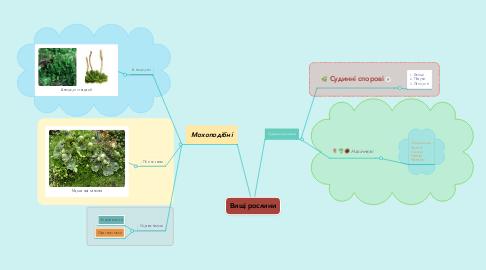 Mind Map: Вищі рослини