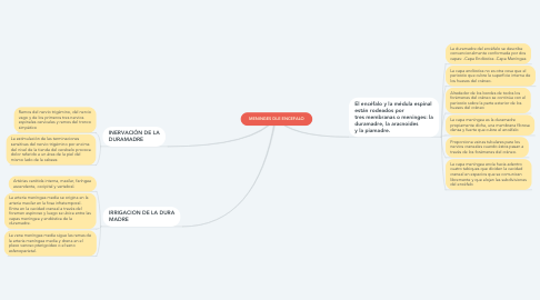 Mind Map: MENINGES DLE ENCEFALO