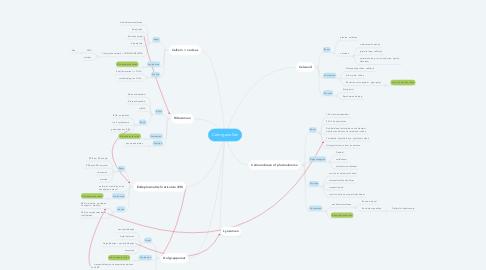 Mind Map: Celorganellen