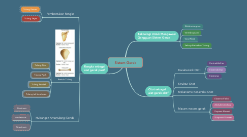 Mind Map: Sistem Gerak