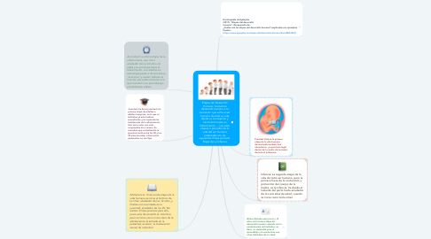 Mind Map: Etapas del Desarrollo Humano: Llamamos desarrollo humano a la evolución que sufre el ser humano durante su vida desde su concepción y nacimiento hasta su fallecimiento. ... Las siete etapas o periodos de la vida del ser humano ordenadas son las siguientes: Etapa prenatal. Etapa de La Infancia