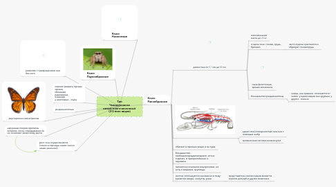 Mind Map: Тип Членистоногие самый многочисленный  (2/3 всех видов)