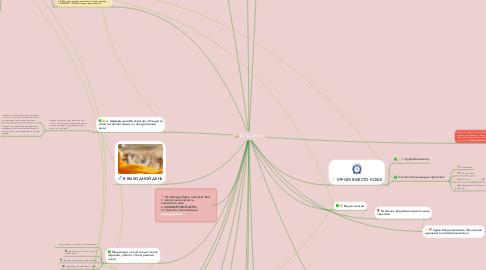 Mind Map: День с Йогой