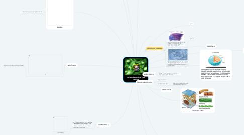 Mind Map: cosa costituisce una cellula