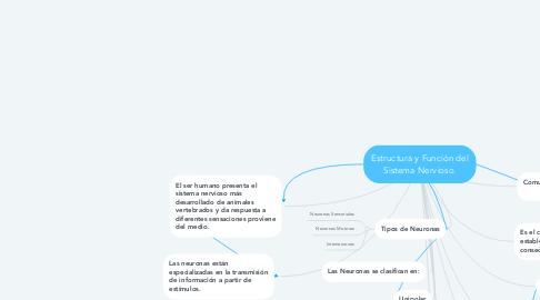 Mind Map: Estructura y Función del Sistema Nervioso.