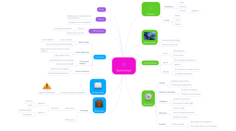 Mind Map: Bacteriología