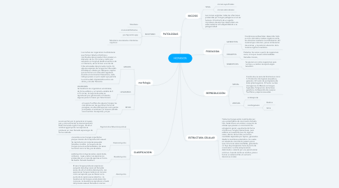 Mind Map: HONGOS
