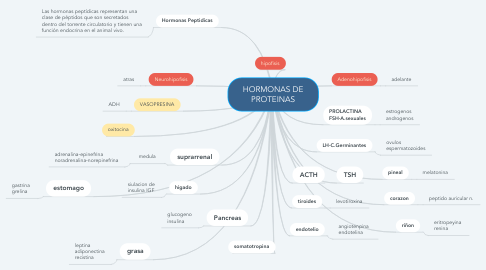 Mind Map: HORMONAS DE PROTEINAS