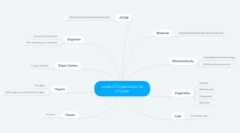 Mind Map: Levels of Organization for a human