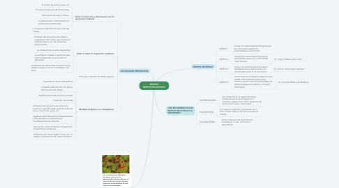 Mind Map: RIESGOS INFECTO-BIOLOGICOS