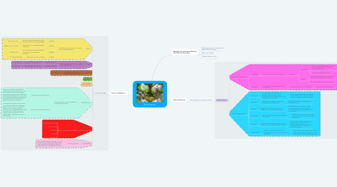 Mind Map: Ecossistemas