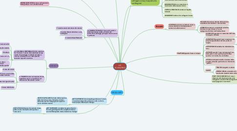 Mind Map: LO SCHELETRO