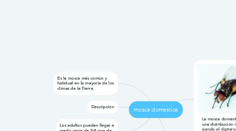 Mind Map: mosca domestica