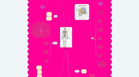 Mind Map: Ossos do corpo humano