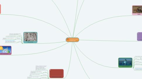 Mind Map: Problemas medio ambientales
