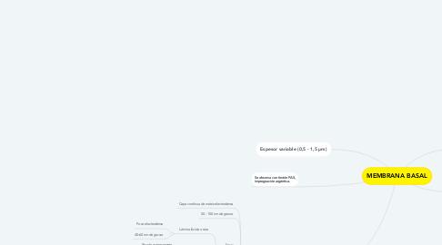 Mind Map: MEMBRANA BASAL