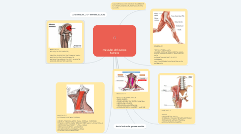 Mind Map: ANATOMY LEARNING 3D