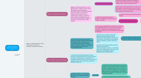 Mind Map: Las tres principales unidades funcionales de Luria