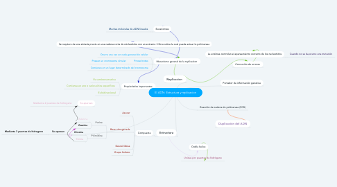 Mind Map: El ADN: Estructura y replicacion