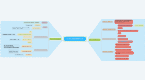 Mind Map: EXUDADOS GENITALES