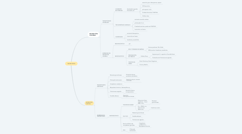 Mind Map: SECRECIONES