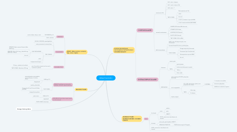 Mind Map: HÉMATOLOGIE 2