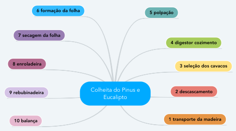 Mind Map: Colheita do Pinus e Eucalipto