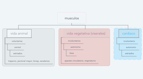Mind Map: musculos