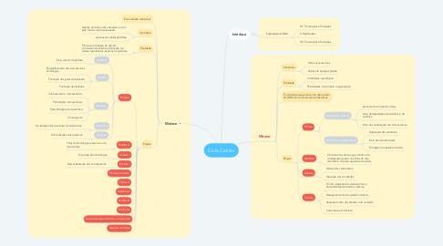 Mind Map: Ciclo Celular