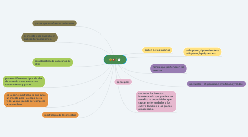 Mind Map: INSECTOS