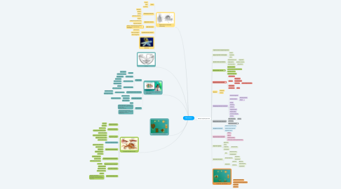 Mind Map: Моллюски