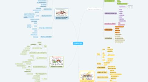 Mind Map: Членистоногие