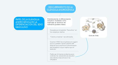Mind Map: DESCUBRIMIENTO DE LA GLÁNDULA ANDROGÉNICA