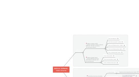 Mind Map: MEDULA ESPINHAL: tratos nervosos
